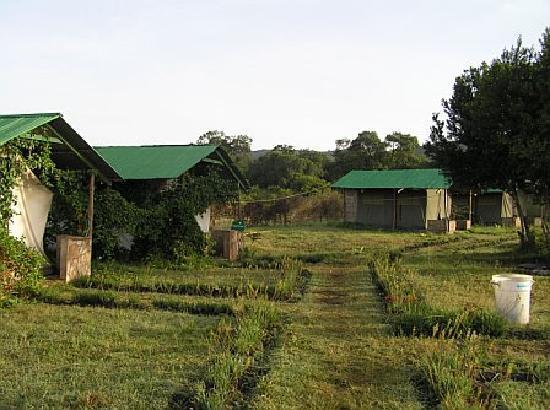Flamingo Camp and Cottages Safari: Camp