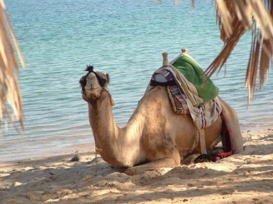 Sharm Excursions ภาพถ่าย