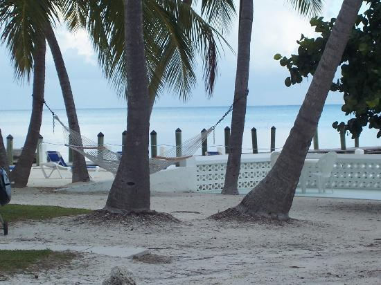 Pines and Palms Resort: Enjoy a swing