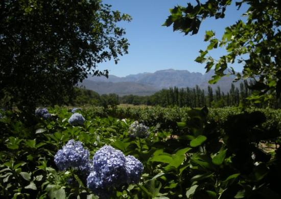 Franschhoek, Sudáfrica: The scenery was a s spectacular as the wine. Just beautiful!