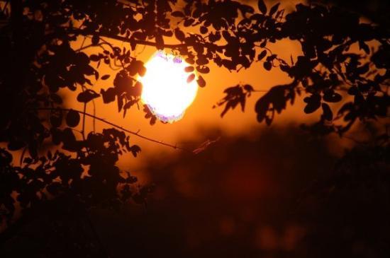 Serondela Reserve Foto