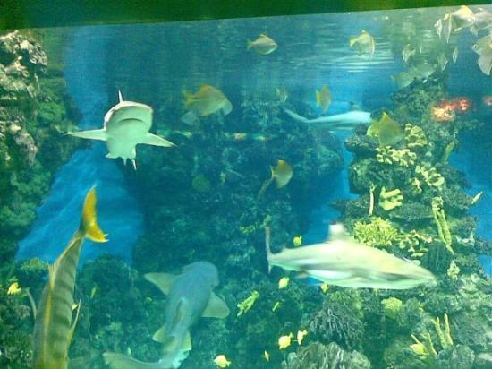 L'Aquarium de Barcelona: acquario con 5 pescecani...