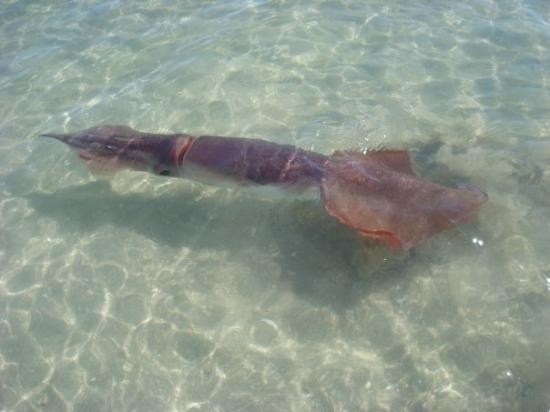 Punta Chivato Photo