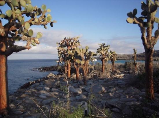 Santa Cruz, Ecuador: Striking cacti adorn the landscape, Santa Fe