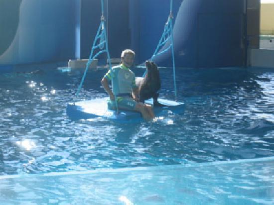 Enoshima Aquarium: アシカブランコ