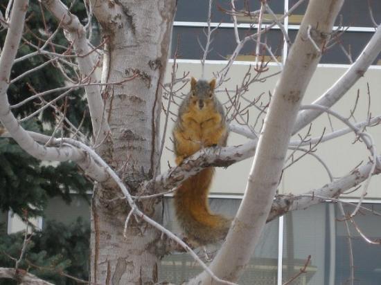 ฟอร์ตคอลลินส์, โคโลราโด: Squirel everywhere in university..