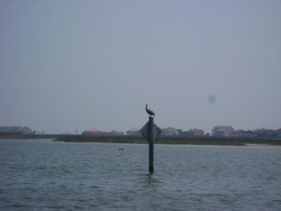 People fishing picture of corpus christi texas gulf for Corpus fishing forum