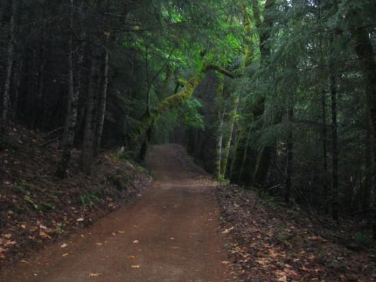 Hydesville, CA: This was the road leading up the mountain to the cabin...beautiful.