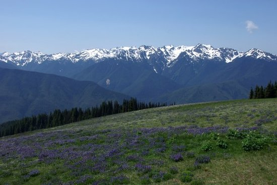 Parque Nacional Olympic, WA: Hurricane Ridge, Olympic National Park