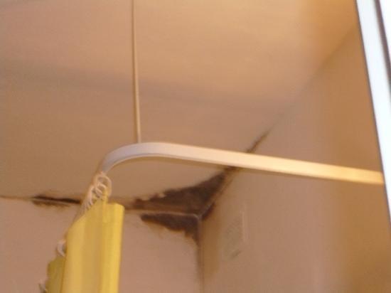 muffa in bagno - Picture of Canifor Hotel, Qawra - TripAdvisor