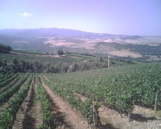 Le 7 Camicie: Landscape from the guesthouse