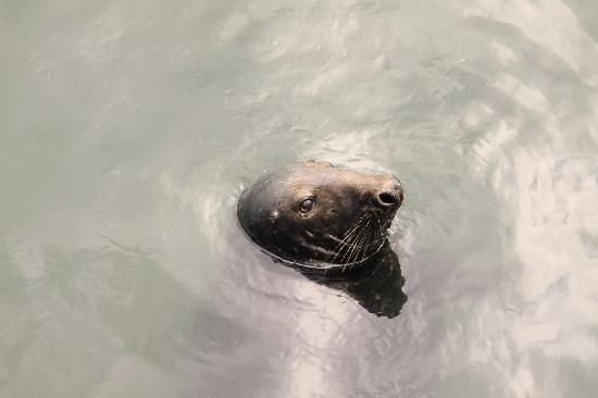 The Merrion Hotel: Leopard seal in Howth