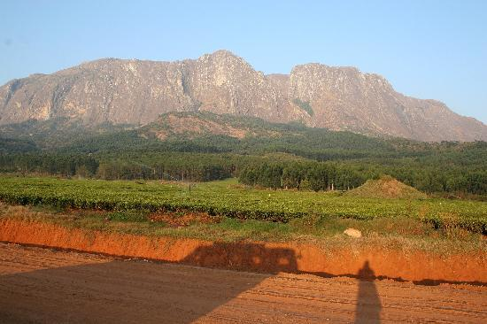 Mount Mulanje: Tea estate at Mulanje
