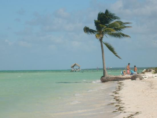 Melia Cayo Guillermo: Awesome