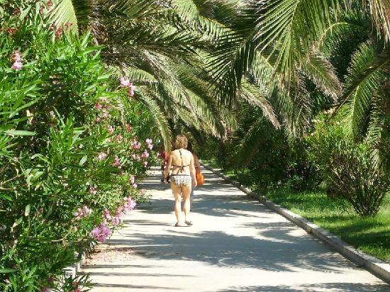 Passeggiata tra le palme - Foto di Residence Hotel Le Terrazze ...