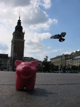 ตลาดนัดรีเน็ค โกลนี่: Town Hall - Market Squarel