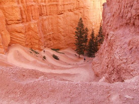 Sunrise Point: Pathway down to the bottom of Bryce Canyon.