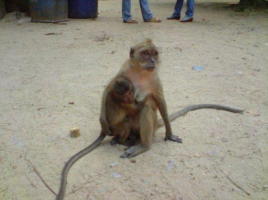 อ่าวพระนาง: monkeys