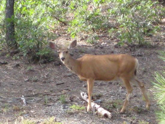 Hart's Rocky Mountain Retreat: Our Neighbor
