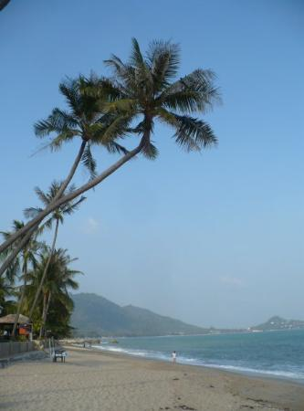 Lamai Beach Photo