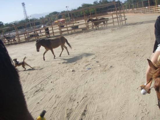 San Jose del Cabo, Mexico: We had a donkey stalker the WHOLE ride to and from the beach.  It was kinda scary because the ra