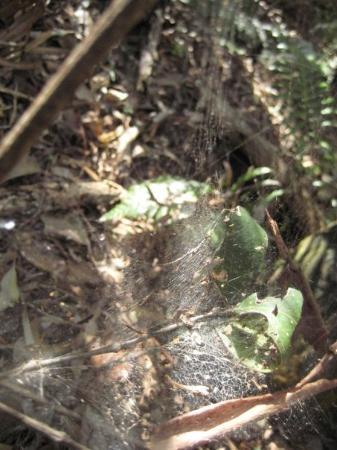 Echo Point Park: spider web spotted midway through the bush walk