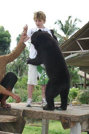 เตกัลลาลัง , อินโดนีเซีย: Up close and personal with a bear ! Zach that's too close !