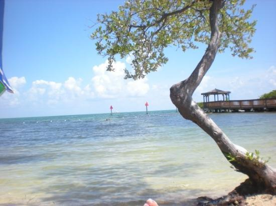 The Gulf Side Of The Keys Picture Of Key Largo Florida