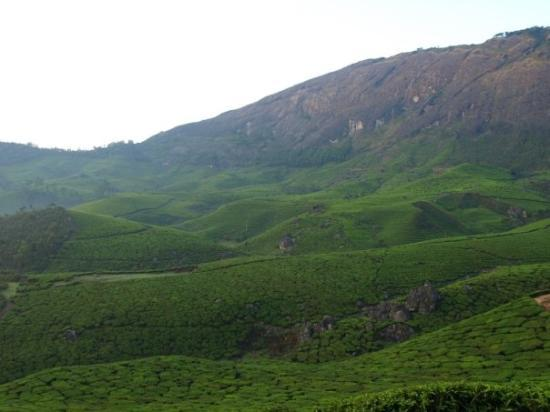 มุนนาร์, อินเดีย: The tea estates at Munnar