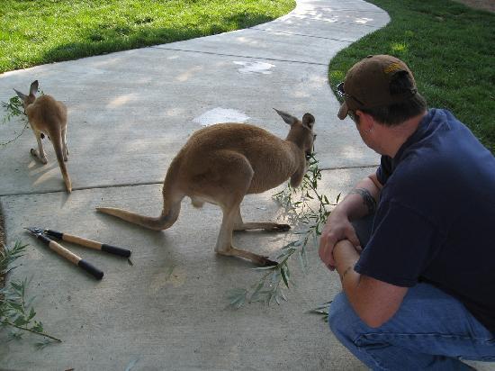 Tanganyika Wildlife Park: Brian with Kangaroo