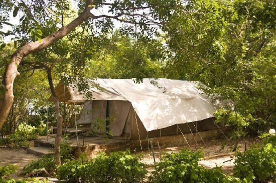 Bird Safari Camp tented accomodation