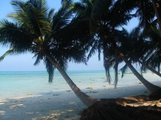 Havelock Island Photo