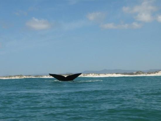 Cape Agulhas, แอฟริกาใต้: A Whale's tail