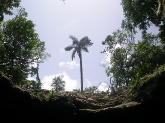 Temple of Doom (Cenote Esqueleto): Trees outside the cenote.  Notice the thin rock layer in these parts of Yucatan.  Cenotes are ac