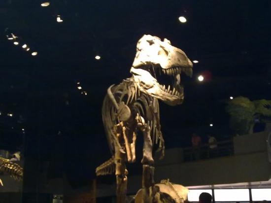 ราชพิพิธภัณฑ์ไทร์เรล: T-Rex, Royal Tyrrell Museum, Drumheller, Alberta