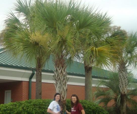 ปานามาซิตี, ฟลอริด้า: Palm Trees!