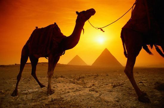 พีระมิดคูฟู: Camel ride around the Pyramids of Giza during sunset