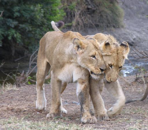 Kaia Tani Guesthouse: safari