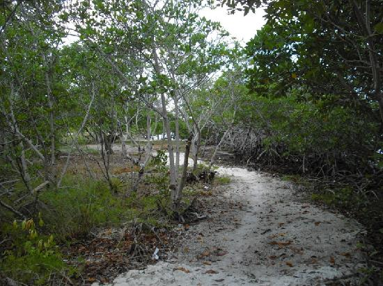Coco Plum Island Resort: the mangrove trail