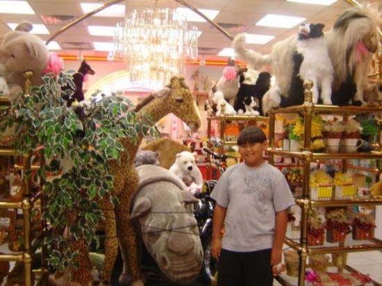 Canonsburg, PA: CJ with stuff animal display Sarris's Chocolate Factory