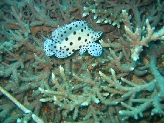 Pulau Aur, Malaysia: So interesting
