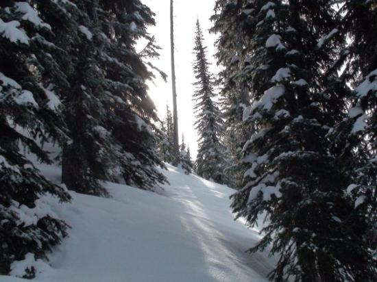 Nakusp, Kanada: Another shot of the typical skiing terrain in the trees.