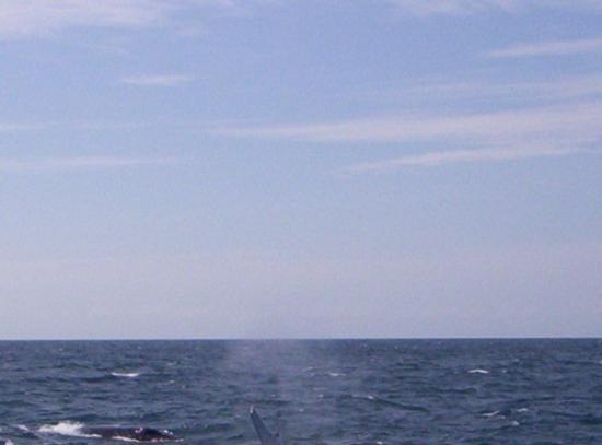 Merimbula صورة فوتوغرافية