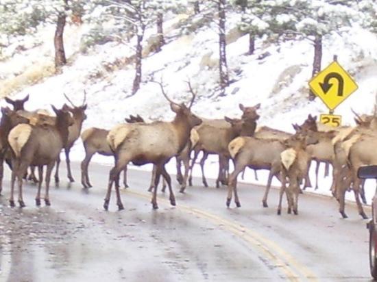 Rocky Mountain National Park ภาพถ่าย