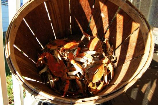 Tylerton, MD: What was left of the bushel o' crabs caught and steamed by Dwight Marshall Sr. himself....