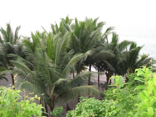 View form our cottages; Esmeraldas province '06