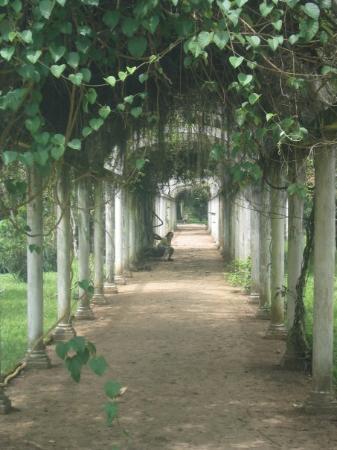 Botanical Garden (Jardim Botanico): Jardim Botanico