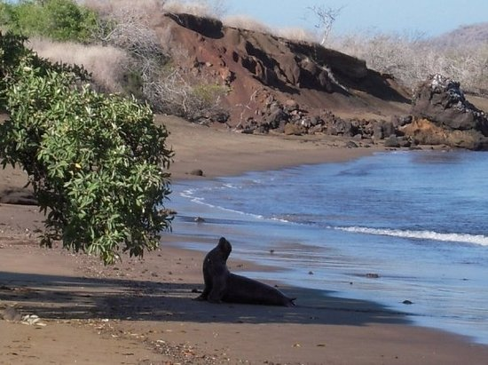 Sea lion poses on picturesque Floreana