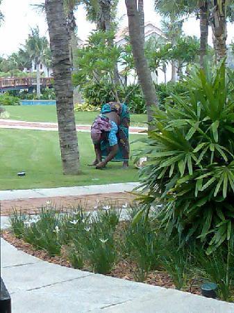 เรดิสัน บลู เทมเปิล เบย์ รีสอร์ท เทมเปิ้ลเบย์ มหาบาลีปุราม: woman working on the garden