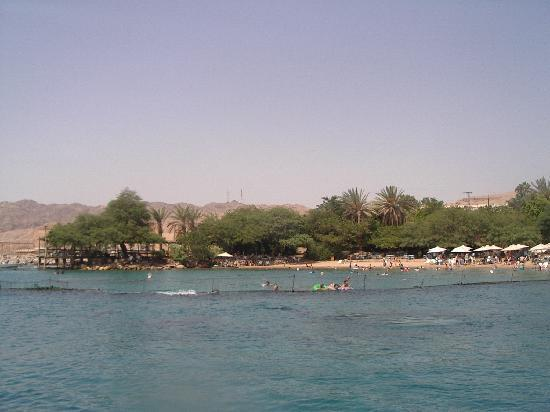 Dolphin Reef : view from the jetty
